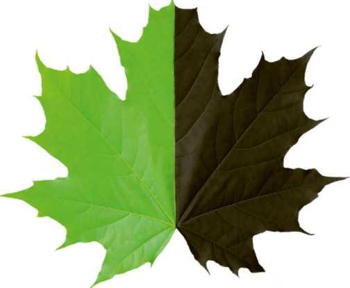 Зелени, Црни лист